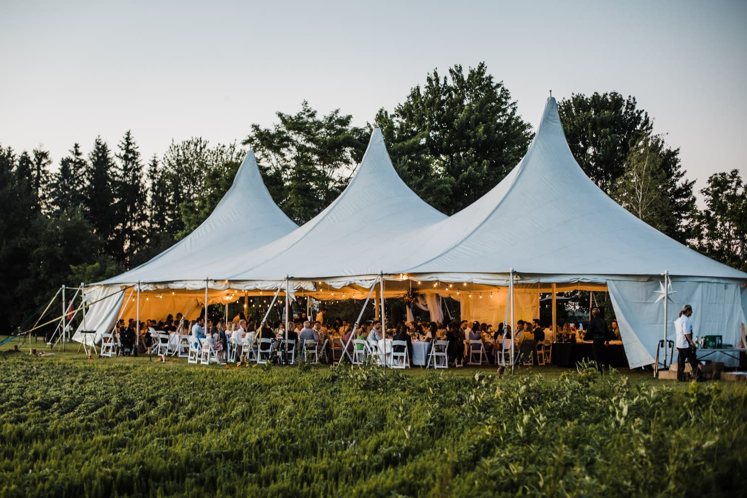 guests sit under tent at backyard wedding