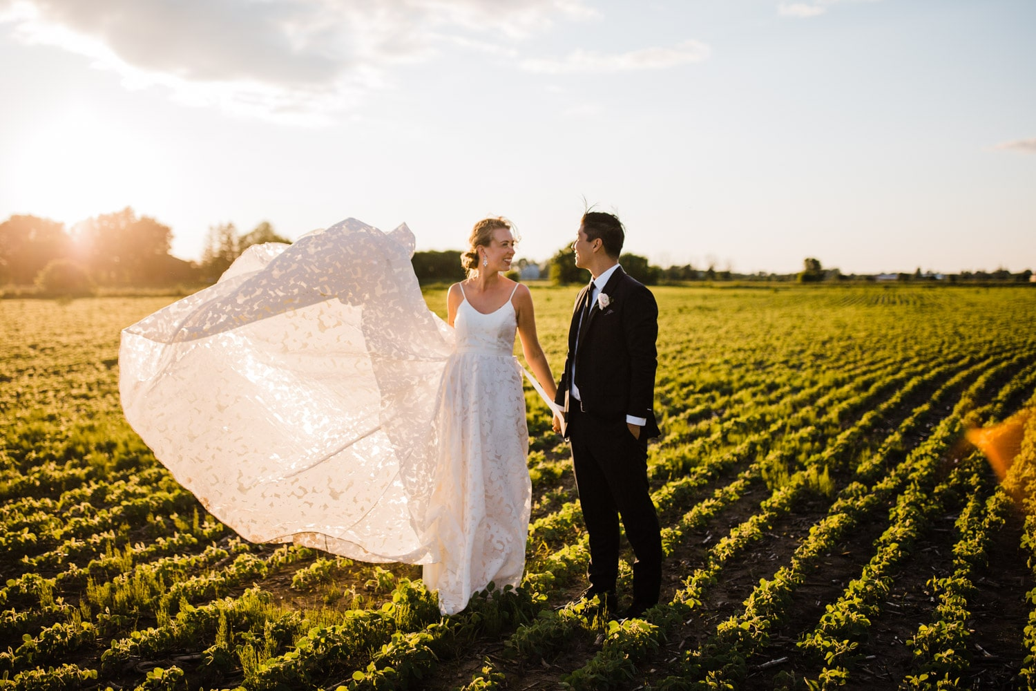 bride and groom in a field at sunset - ottawa wedding photographer